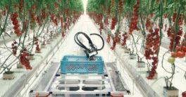 Según el Ministerio de Agricultura, a finales de siglo el país será más de la mitad del país en desierto